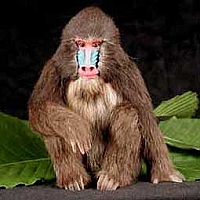 Mandrill Fur Figurine