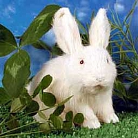 Rabbit White Fur Figurine