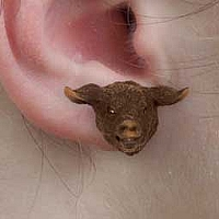 Pig Black Earrings Post