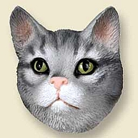 Silver Shorthaired Tabby Cat Doogie Head