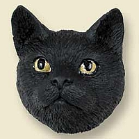 Black Shorthaired Tabby Cat Doogie Head