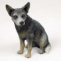 Australian Cattle Dog Blue