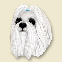 Shih Tzu White Doogie Head