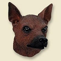 Miniature Pinscher Red & Brown Doogie Head