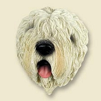 Soft Coated Wheaten Terrier Doogie Head