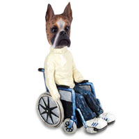 Boxer Brindle Wheelchair Doogie Collectable Figurine
