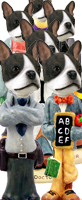 Boston Terrier Doogie Characters