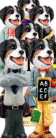 Bernese Mountain Dog Doogie Characters