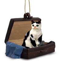 Black & White Shorthaired Tabby Cat Traveling Companion