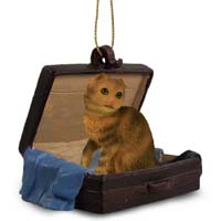 Brown Tabby Scottish Fold Traveling Companion