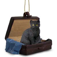 Black Shorthaired Tabby Cat Traveling Companion