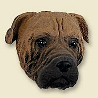 Bullmastiff Doogie Head
