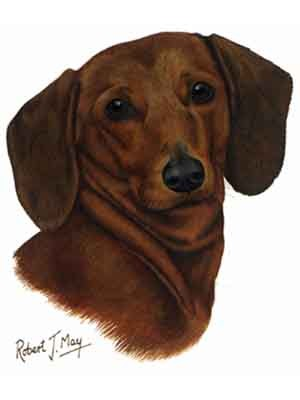Dachshund red greeting cards set of 6 enevelope not included m4hsunfo