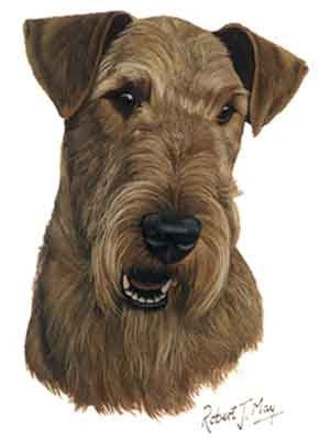 Airedale Greeting Cards Set of 6 *Enevelope NOT included!*