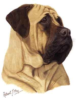 Mastiff Greeting Cards Set of 6 *Enevelope NOT included!*