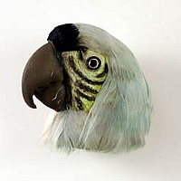 Green Parrot Feathered Magnet