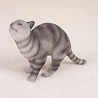 Silver Shorthaired Tabby Cat Pet Me