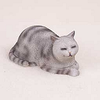 Silver Shorthaired Tabby Cat Cat Nap