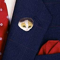 Tortoise & White Scottish Fold Pin