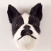 Boston Terrier Fur Magnet