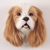 Cavalier King Charles Spaniel Brown & White Fur Magnet