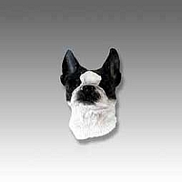Boston Terrier Tiny One head