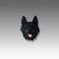 Schipperke Tiny One head