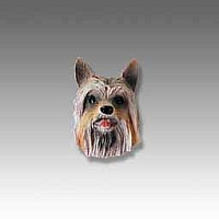Silky Terrier Tiny One head