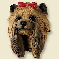 Yorkshire Terrier Doogie Head