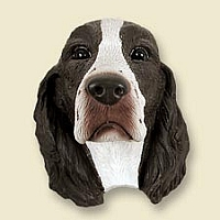 Springer Spaniel Liver & White Doogie Head