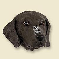 German Short Haired Pointer Doogie Head