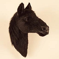 Black Horse Fur Magnet