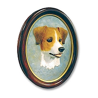 Jack Russell Terrier Brown & White w/Rough Coat Portrait