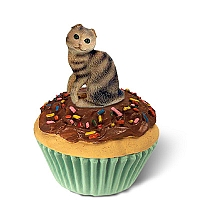 Brown Tabby Scottish Fold Shorthaired Kittycake Trinket Box