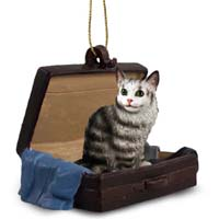 Silver Tabby Maine Coon Cat Traveling Companion