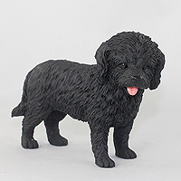 Cockapoo Black