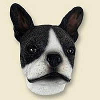 Boston Terrier Doogie Head