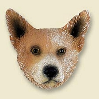 Australian Cattle Red Dog Doogie Head