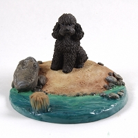 Poodle Chocolate w/Sport Cut Everyday Life Beach