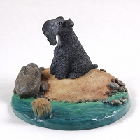 Kerry Blue Terrier Everyday Life Beach