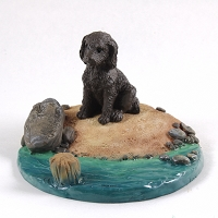 Labradoodle Chocolate Everyday Life Beach