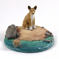 Basenji Everyday Life Beach