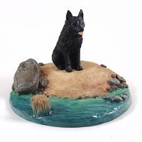 Schipperke Everyday Life Beach