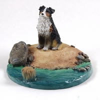 Australian Shepherd Tricolor Everyday Life Beach