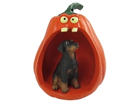Doberman Pinscher Black w/Uncropped Ears Halloween Figurine and Spooky Pumpkin