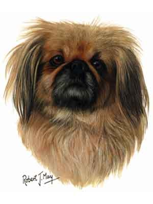 Pekingese Greeting Cards Set of 6 *Enevelope NOT included!*