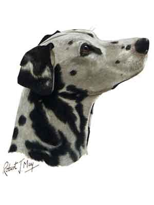 Dalmatian Greeting Cards Set of 6 *Enevelope NOT included!*