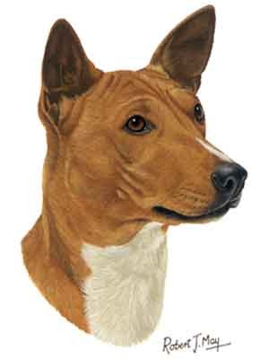 Basenji Greeting Cards Set of 6 *Enevelope NOT included!*