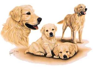 Golden Retrievers Greeting Cards Set of 6 *Enevelope NOT included!*